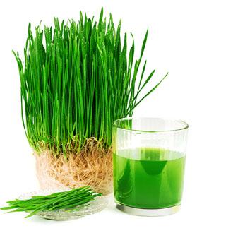 img-herbs-1